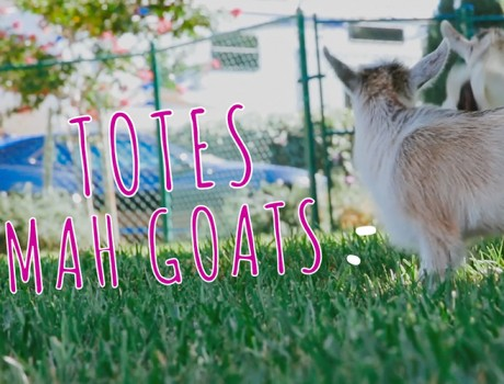 Corgis & Goats – Motion Tracked Title Animations